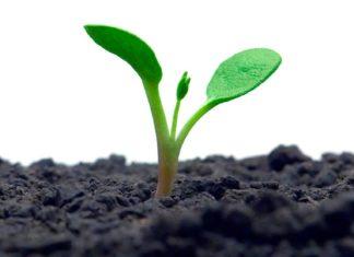Crescimento espiritual