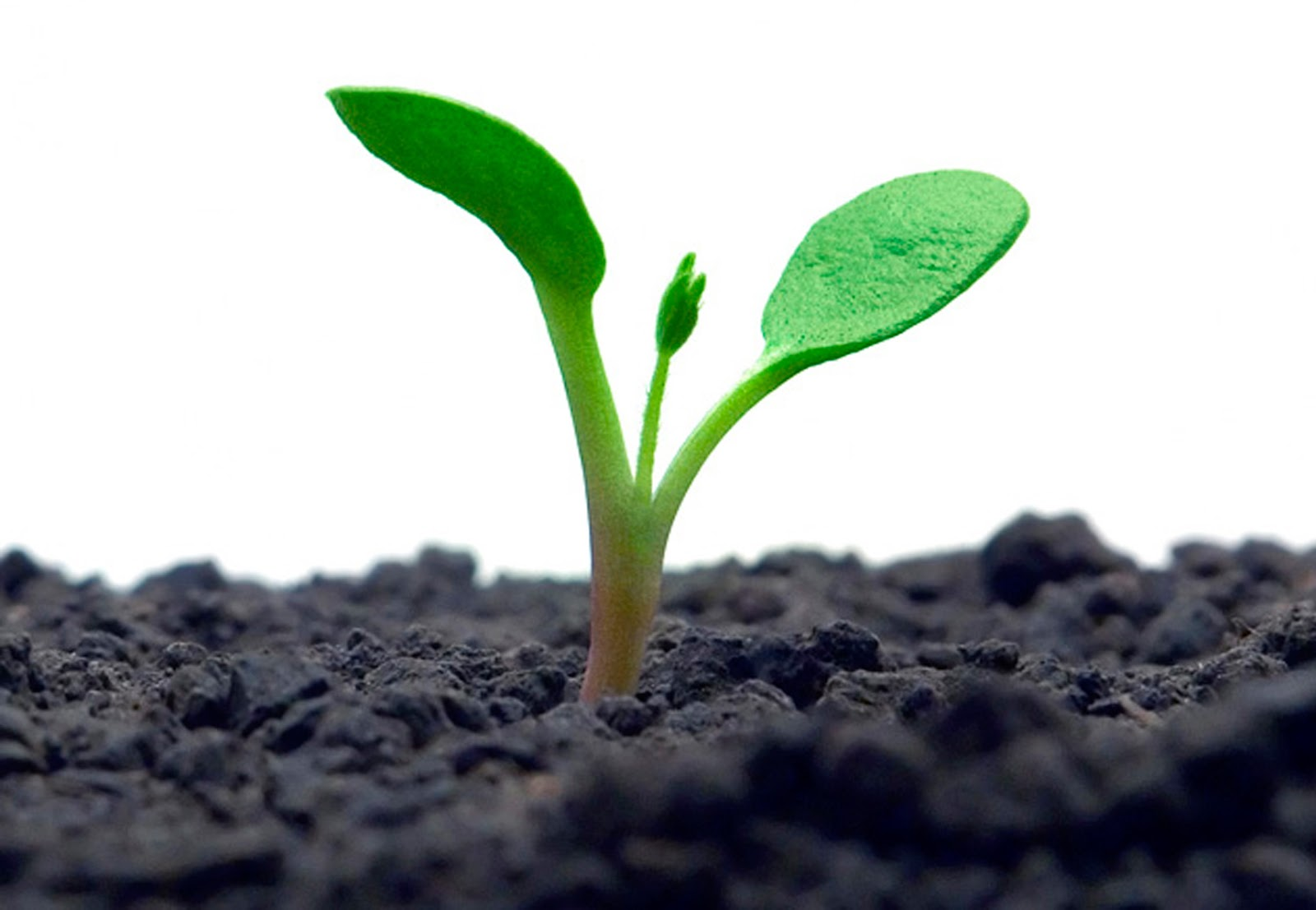 Resultado de imagem para Crescimento Espiritual